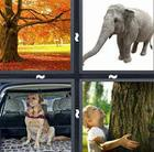 4 Pics 1 Word answers and cheats level 62