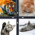 4 Pics 1 Word answers and cheats level 1198