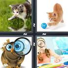 4 Pics 1 Word answers and cheats level 1224
