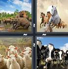 4 Pics 1 Word answers and cheats level 1304