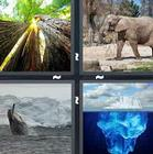 4 Pics 1 Word answers and cheats level 1313