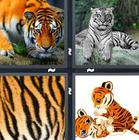 4 Pics 1 Word answers and cheats level 1354