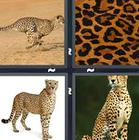 4 Pics 1 Word answers and cheats level 1360