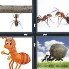 4 Pics 1 Word answers and cheats level 1367