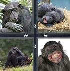 4 Pics 1 Word answers and cheats level 1372