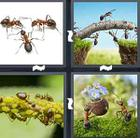 4 Pics 1 Word answers and cheats level 1421