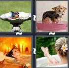 4 Pics 1 Word answers and cheats level 1426