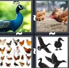 4 Pics 1 Word answers and cheats level 1455