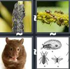 4 Pics 1 Word answers and cheats level 1601