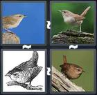 4 Pics 1 Word answers and cheats level 1646