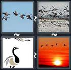 4 Pics 1 Word answers and cheats level 1677