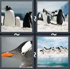 4 Pics 1 Word answers and cheats level 2037