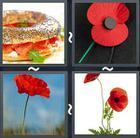 4 Pics 1 Word answers and cheats level 2049