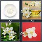 4 Pics 1 Word answers and cheats level 2173