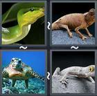 4 Pics 1 Word answers and cheats level 2268
