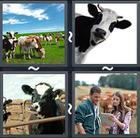 4 Pics 1 Word answers and cheats level 2274