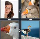 4 Pics 1 Word answers and cheats level 2400