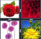 4 Pics 1 Word answers and cheats level 2406
