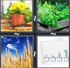 4 Pics 1 Word answers and cheats level 2426