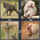 4 Pics 1 Word answers and cheats level 2437