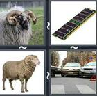 4 Pics 1 Word answers and cheats level 2743