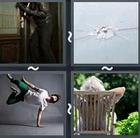 4 Pics 1 Word answers and cheats level 2838