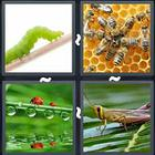 4 Pics 1 Word answers and cheats level 2999