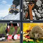 4 Pics 1 Word answers and cheats level 307