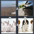 4 Pics 1 Word answers and cheats level 3074