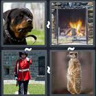 4 Pics 1 Word answers and cheats level 3203