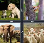 4 Pics 1 Word answers and cheats level 344