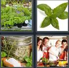 4 Pics 1 Word answers and cheats level 3456