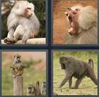 4 Pics 1 Word answers and cheats level 3470