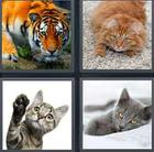 4 Pics 1 Word answers and cheats level 3493