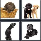 4 Pics 1 Word answers and cheats level 3519