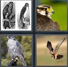 4 Pics 1 Word answers and cheats level 3520