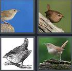 4 Pics 1 Word answers and cheats level 3574
