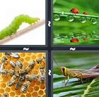 4 Pics 1 Word answers and cheats level 519