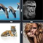 4 Pics 1 Word answers and cheats level 799